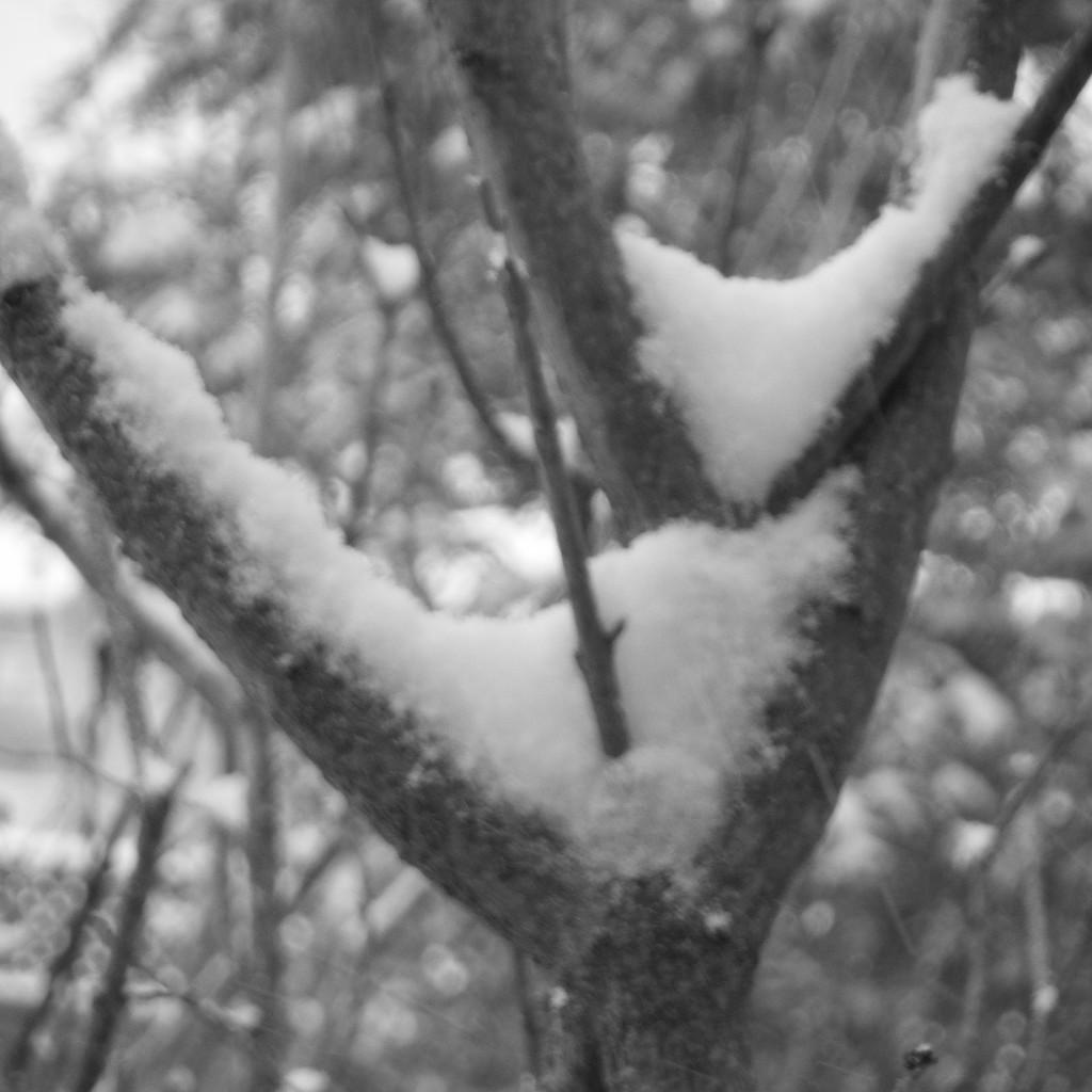 Snowy Vees by spanishliz