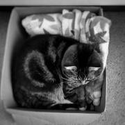 23rd Feb 2021 - Cat in the Box