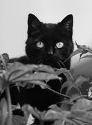 20th Feb 2021 - Jungle cat