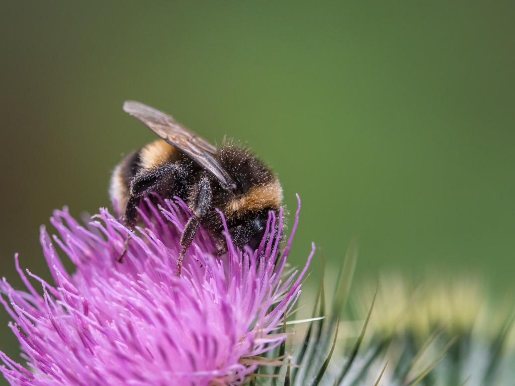 Just a bumble bee by gosia