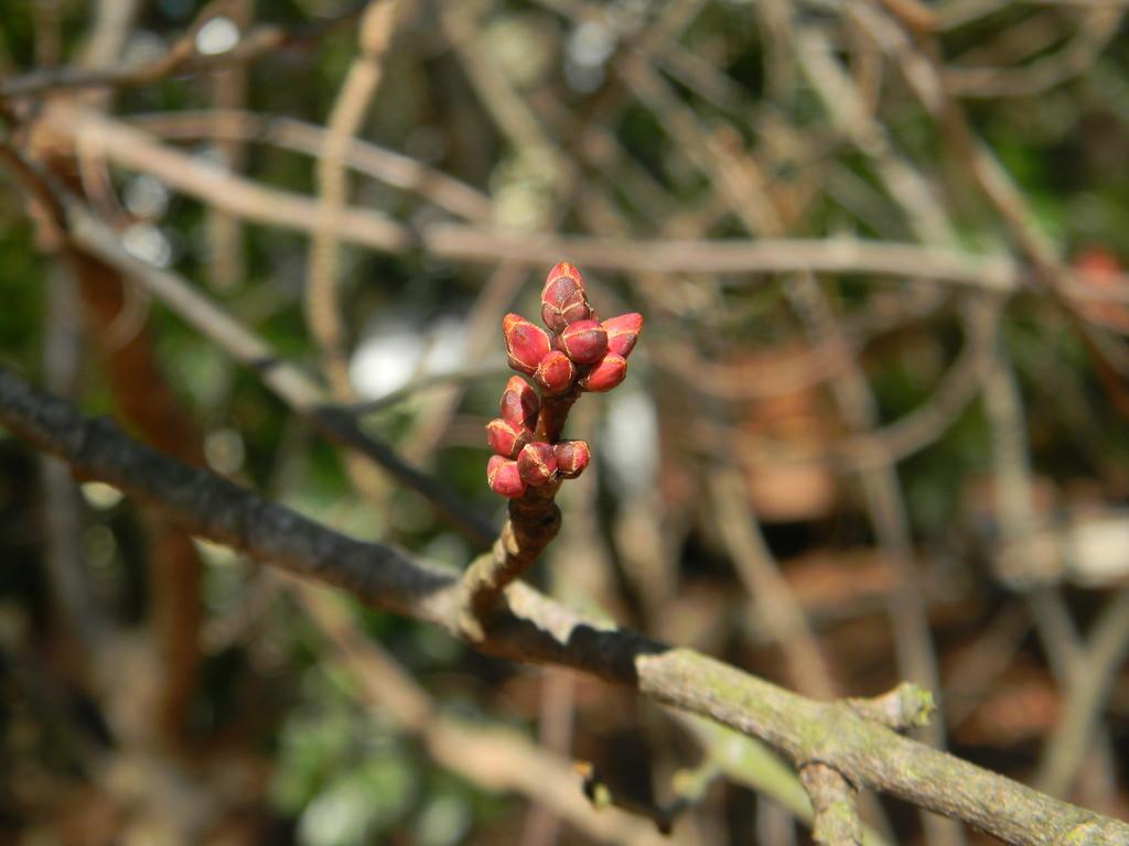 Red Thorns on Bush by sfeldphotos