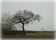 24th Feb 2021 - tree