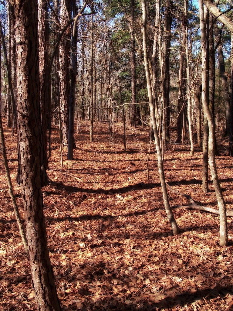Deer trail... by marlboromaam