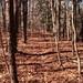 Deer trail...