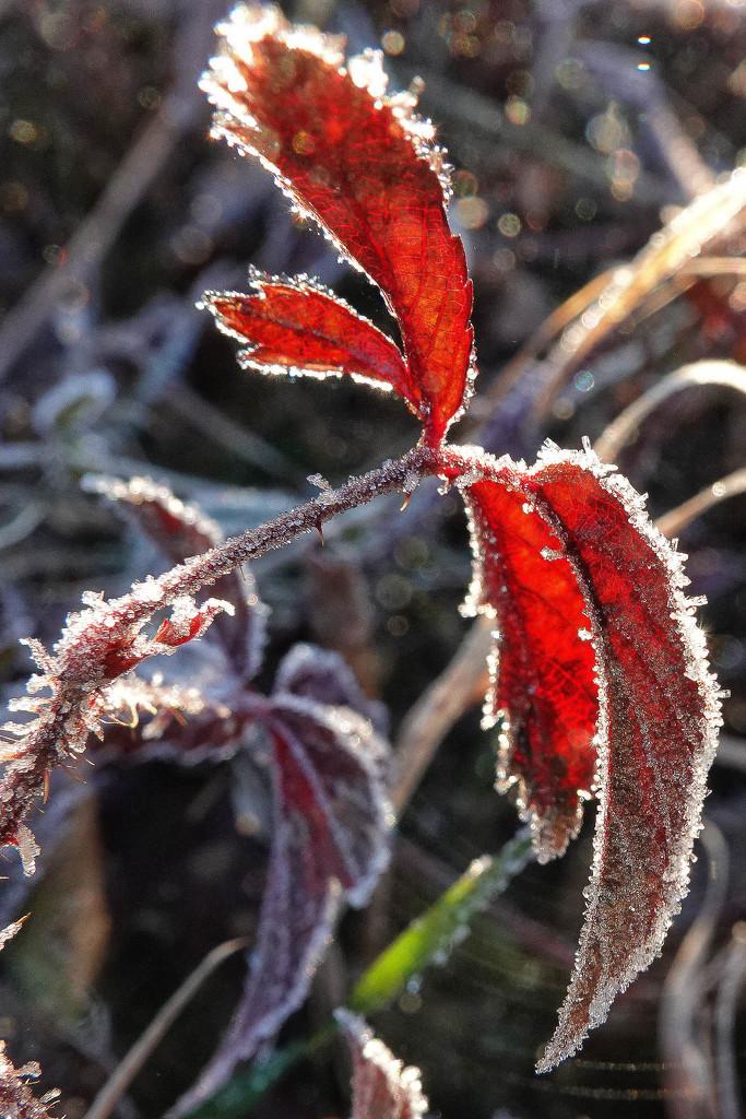Winter Hasn't Gone Yet by milaniet