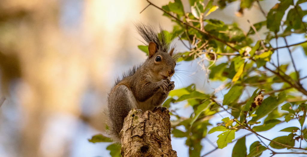 Totem Pole Squirrel! by rickster549