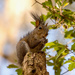 Totem Pole Squirrel!
