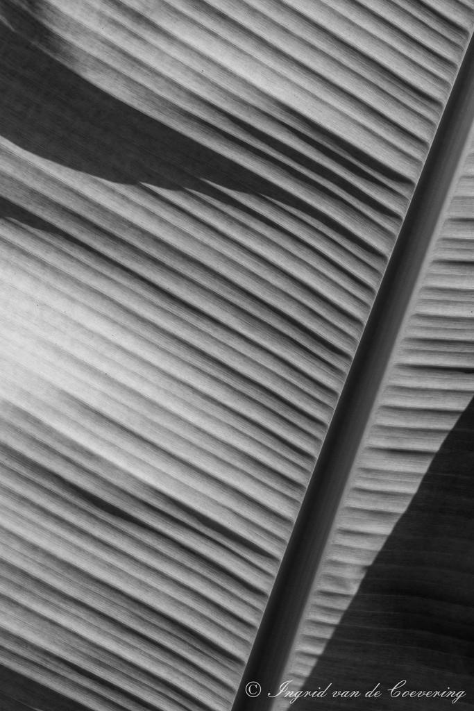 leaf by ingrid01