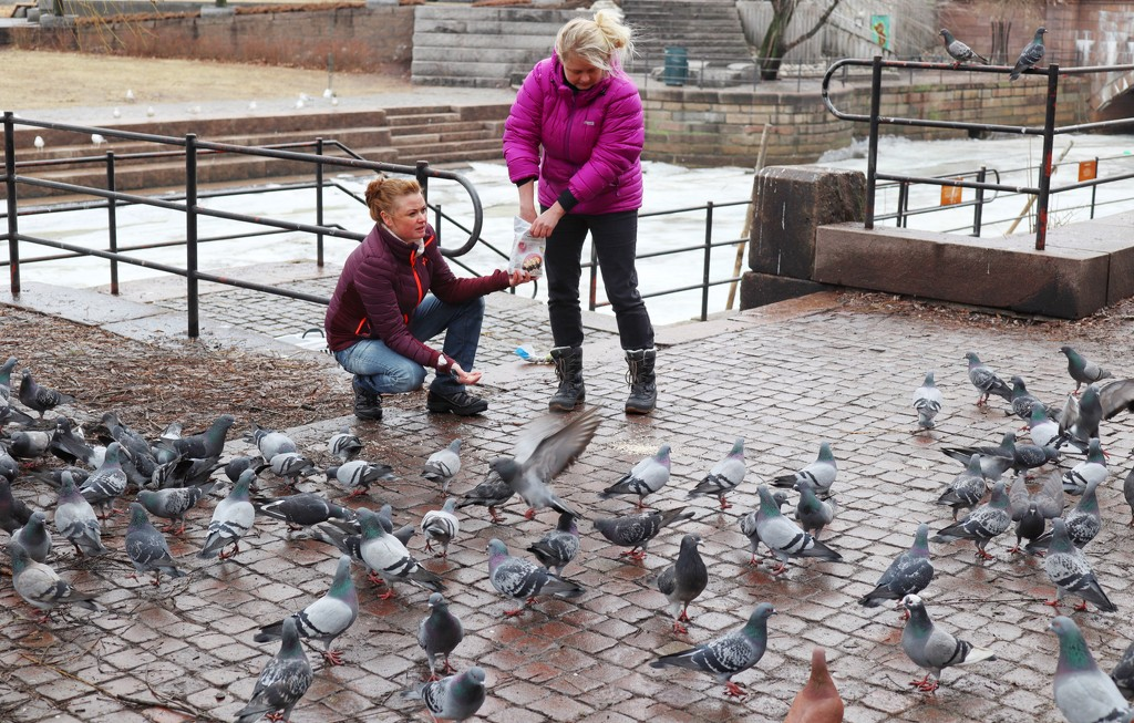 Feeding the pigeons by okvalle