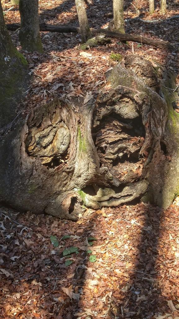 Hollowed face... by marlboromaam