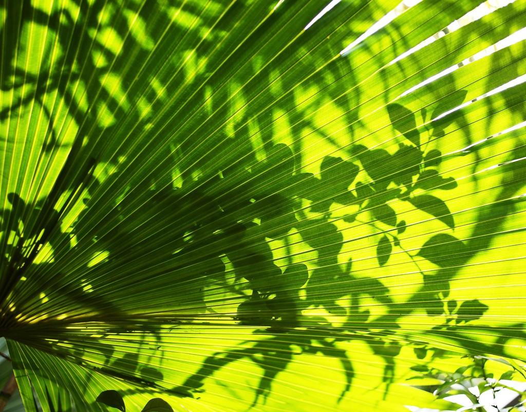 LOL (leaves on leaves) by joemuli