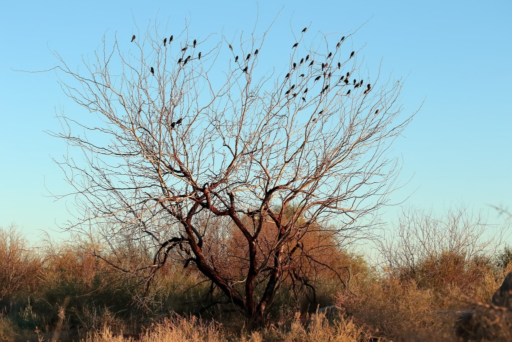 The Tree with Blackbirds by blueberry1222