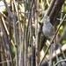 Perky Sparrow