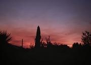 24th Feb 2021 - Sunset