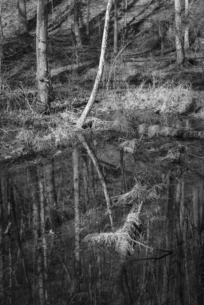 Grassy Log by kvphoto