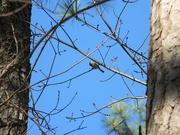 24th Feb 2021 - Bird on Branch
