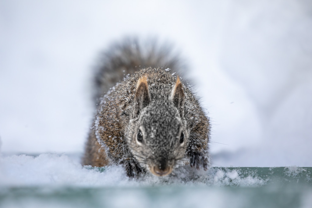 Sneaking Squirrel by jyokota