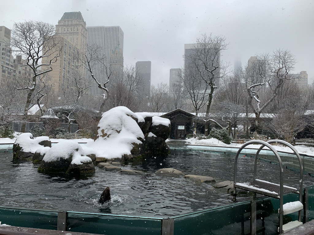 Sea lions in the snow by blackmutts
