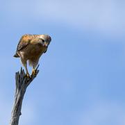 24th Feb 2021 - I spy with my hawks eye......