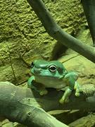 25th Feb 2021 - Frog