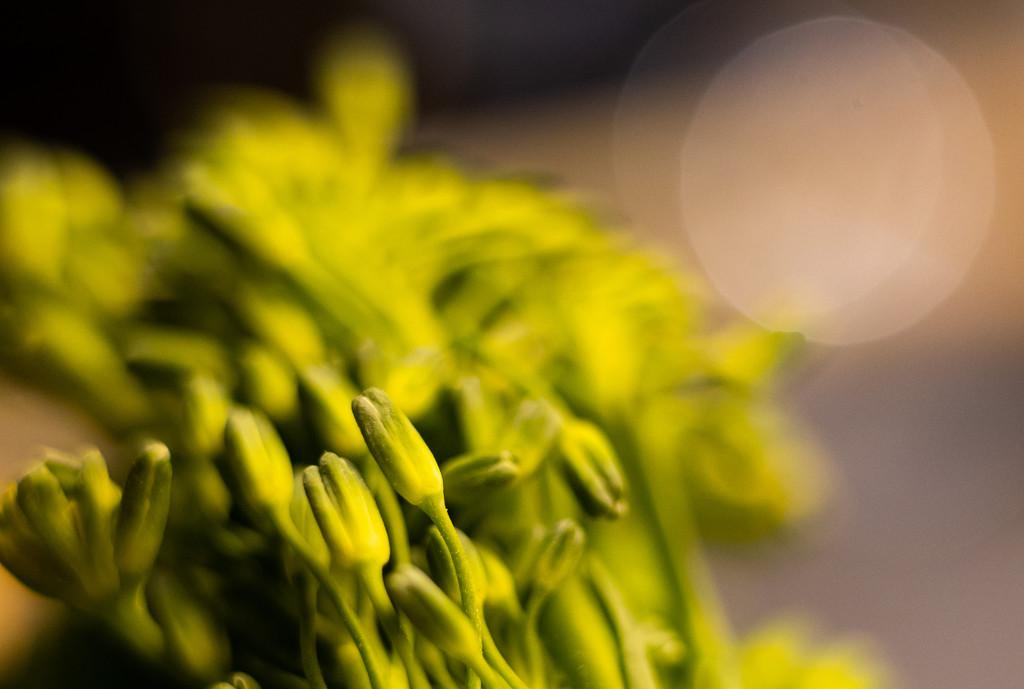 Macro green by peadar