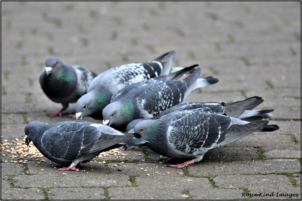 Feed the birds, tuppence a bag by rosiekind