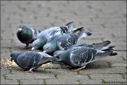 25th Feb 2021 - Feed the birds, tuppence a bag