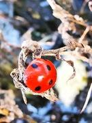 25th Feb 2021 - Ladybird