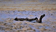 26th Feb 2021 -    Just A Piece Of Driftwood ~
