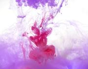 25th Feb 2021 - Pretty Pink Plus Purple