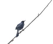 22nd Feb 2021 - Little Bird
