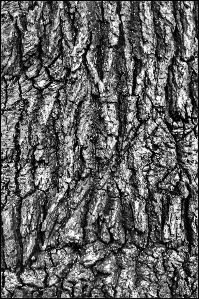 And tree bark is always great for textures and patterns! by lyndamcg