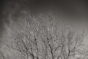 18th Feb 2021 - Treetop
