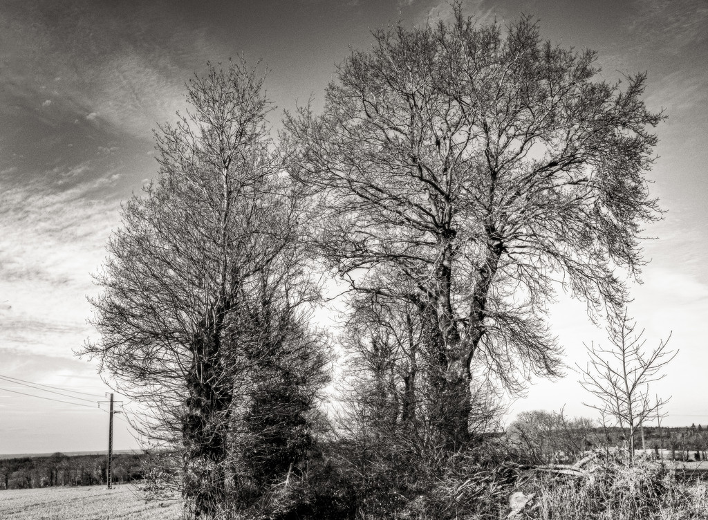 Skeleton Trees... by vignouse
