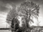 19th Feb 2021 - Skeleton Trees...