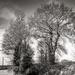 Skeleton Trees...
