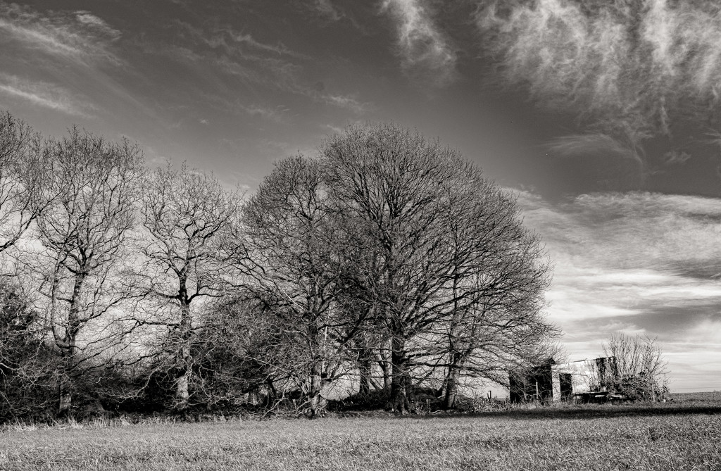 Trees & Sheep Shed by vignouse