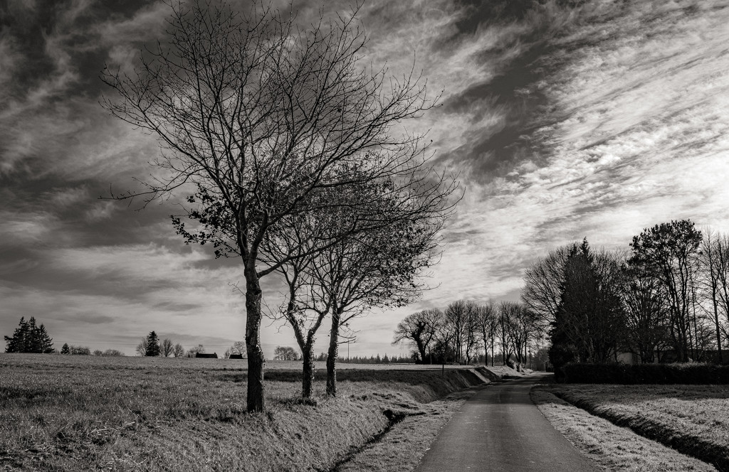 Three foreground trees... by vignouse