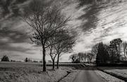 24th Feb 2021 - Three foreground trees...