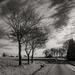 Three foreground trees...