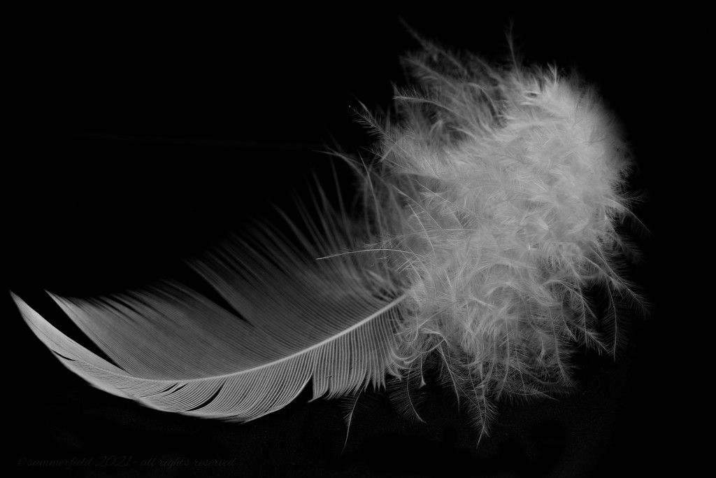 the feather by summerfield