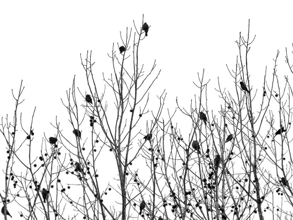 Signs of Spring by grammyn