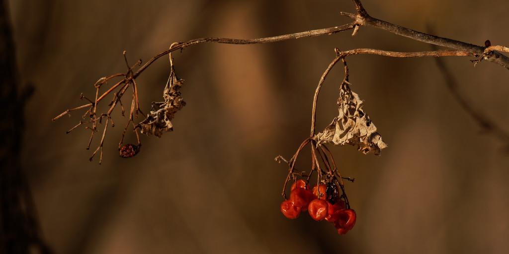 berries by rminer