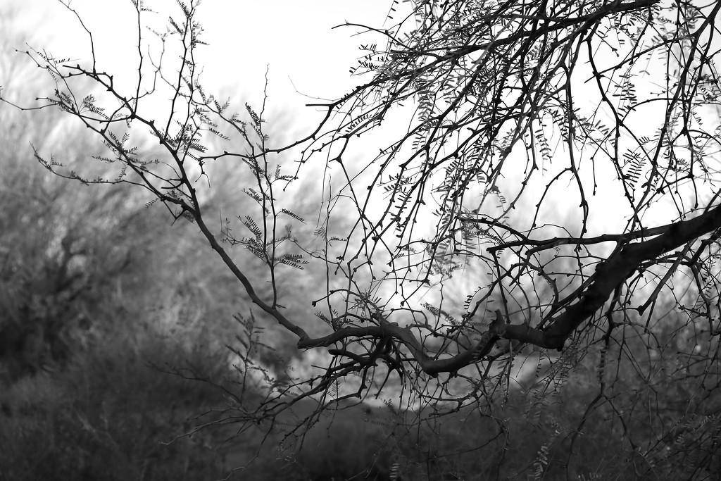 Branch by blueberry1222