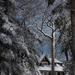 Winter wonderland 57/365 by dora