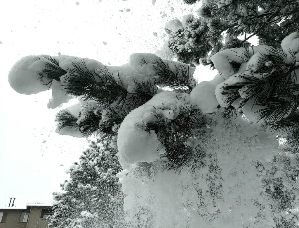 Falling Snow by harbie