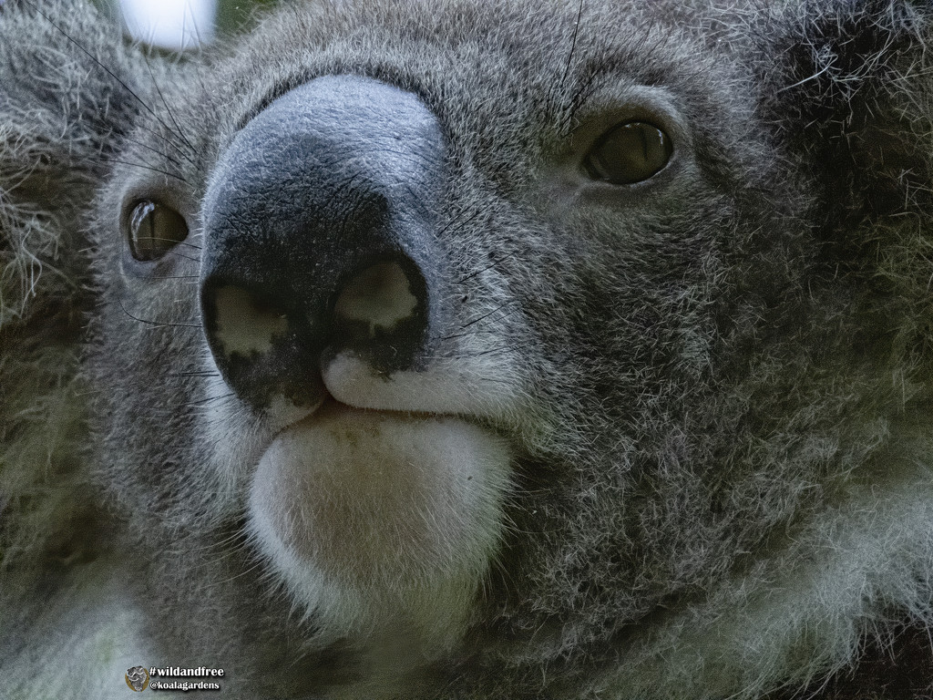 Jesse sooc by koalagardens