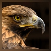 26th Feb 2021 - Golden Eagle