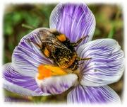 26th Feb 2021 - Pollen Overload