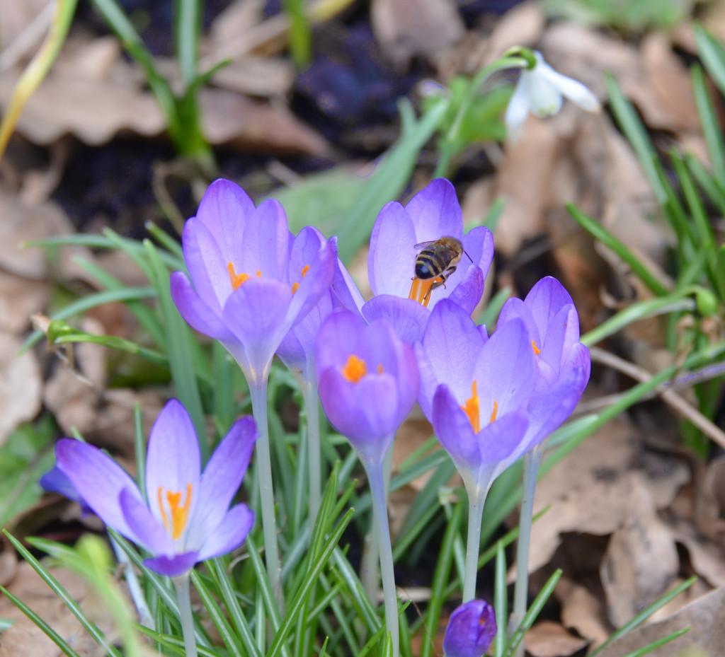 Honey Bee by arkensiel